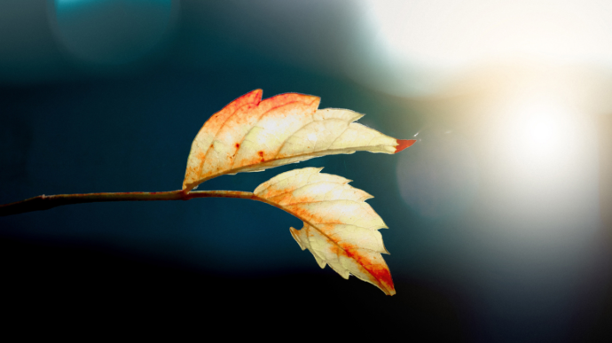 autumn-leaves-690x387